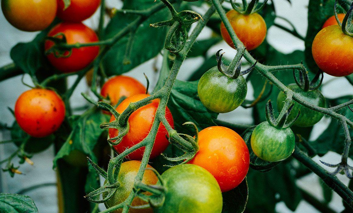 Organic food vs. locally-grown food
