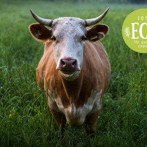 The Secret Life of Farm Animals
